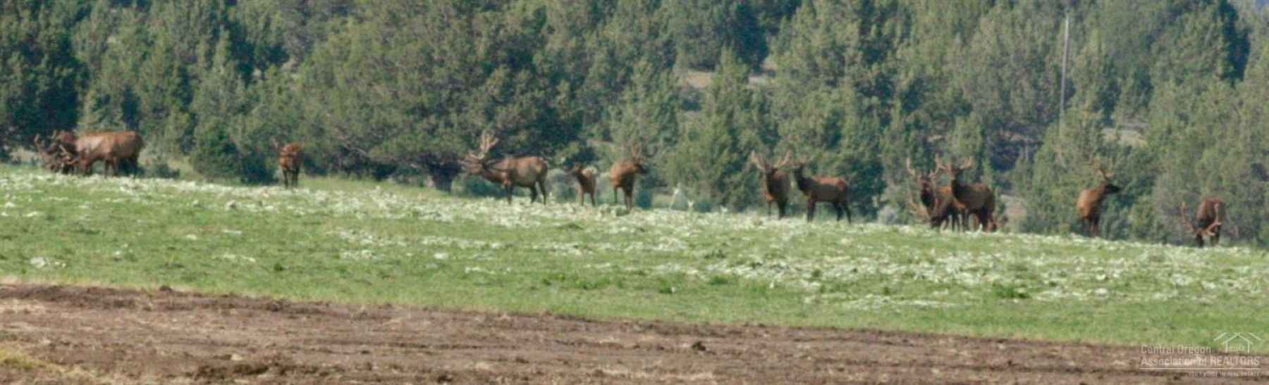 Photo for 33559 Parish Creek Road