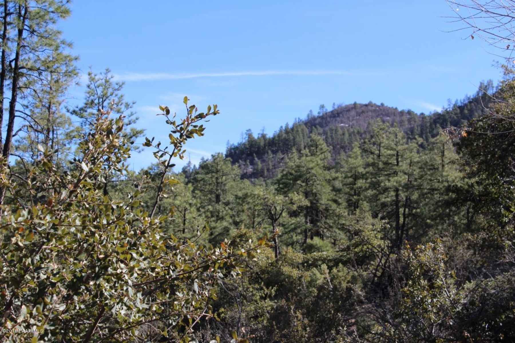 Beauty of the Forested Pines