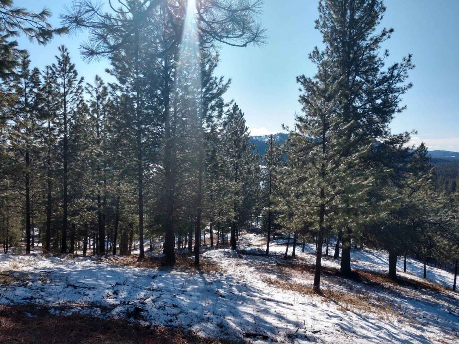 Photo for Lot 18 W Canyon Springs Way