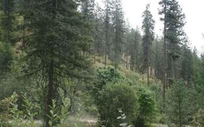 Photo for 3938 E Canyon Springs Way